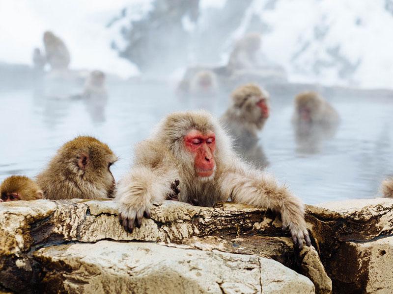 Shiga Kogen Snow Resort